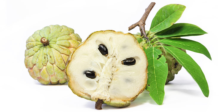 Benefits of eating custard apples!