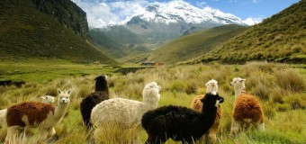 Things to Do in Ecuador