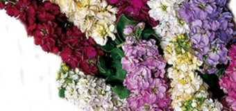 How to keep your flowers fresh for long?