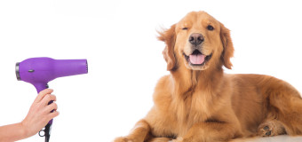Are you able to take care of the cost of dog grooming?